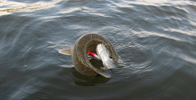 подводная камера для летней рыбалки